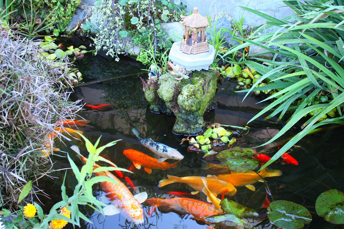 Koi health and pond care for Fish pond materials