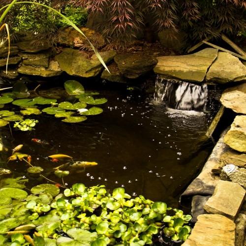 bigstock-Koi-Pond-With-Waterfall-47937140